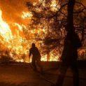Голям пожар гори в Котленската планина
