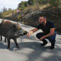 Диво прасе преследва Хекимян в Сливенско