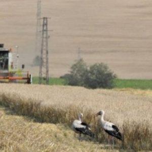 Земеделски стопани от Сливен, Ямбол и Бургас ще получат компенсации за загуби заради сушата