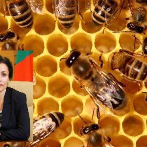 Десислава Танева: Пчелите мрат като мухи в 5 български региона