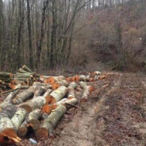 Най-много бракониери върлуват в сливенските гори